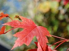 Bit of Fall