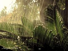Jungle Rain