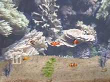 Aquarium Desktop Fish Pack #2