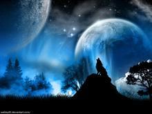 My wonderland
