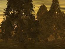 Forrest Scene (SunSet)