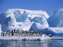 Penguin Fun