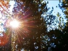 Backyard Sun Rays
