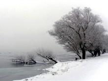 Foggy Morning Snow