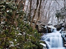 Winter Forest River