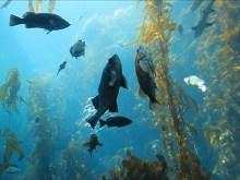 Sea Life III