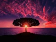 Loner Sunset