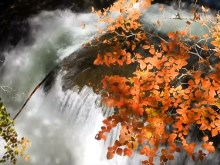 Autumn Falls a2