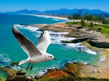 Beach Gull HD