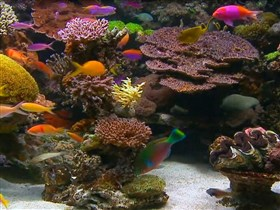tropical reef aquarium