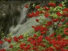 nature's beautiful waterfall