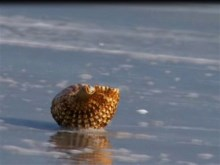 life of a seashell