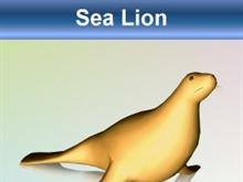 Golden Sea Lion