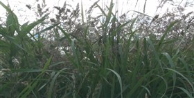 Mixed Grass