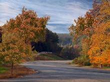 Autumn Roadside