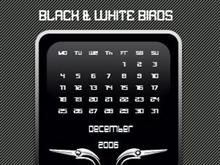 Black & white Birds
